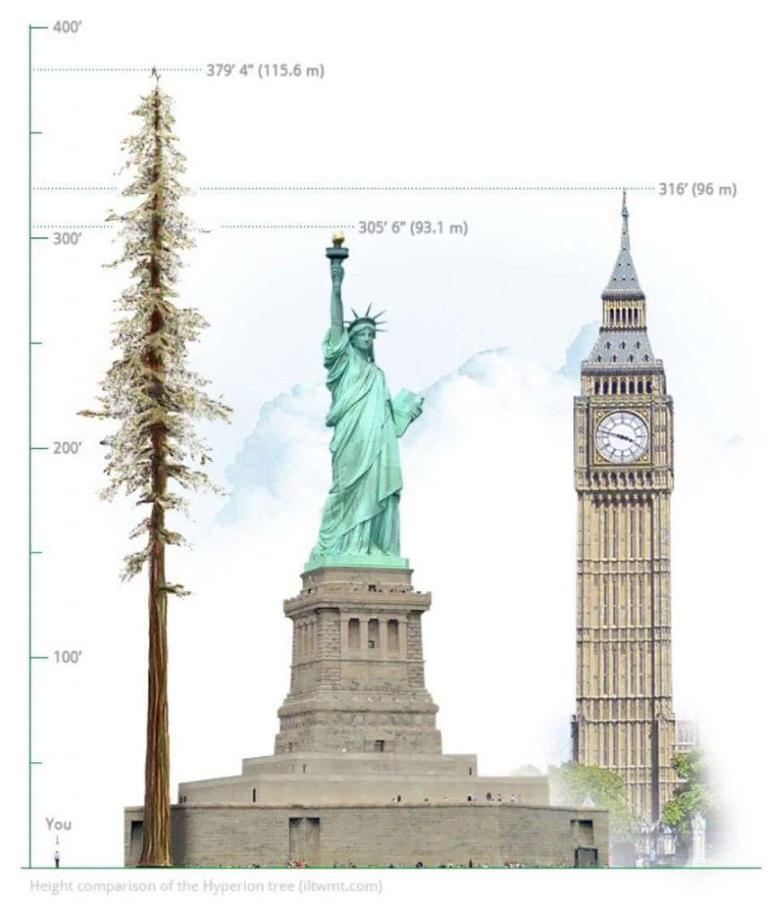 Image of trees and monuments and their height in feet.